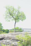 5th Jul 2021 - Tenacious Tree