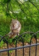 8th Jul 2021 - Happy squirrel