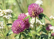 8th Jul 2021 - Wildflowers