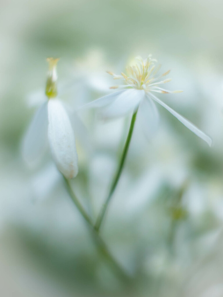 Small, white and unknown  by haskar