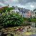 Water lilies by helstor365