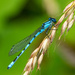 Damsel fly by mave