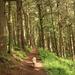Woodland Walkies