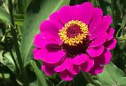 12th Jul 2021 - Flower