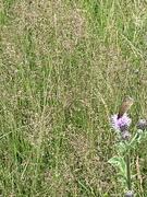 13th Jul 2021 - The ones that got away - butterflies in the grass