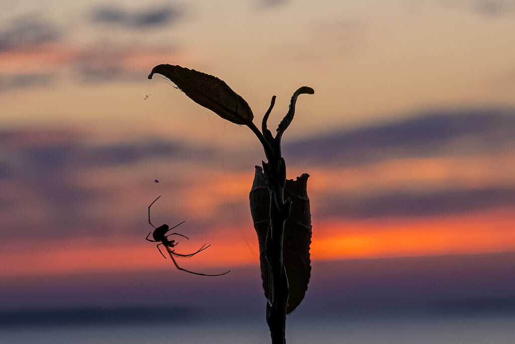 Spider Weaves While Sun Sets by jyokota