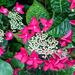 Hydrangea 2 by pamknowler