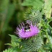 14th Jul 2021 - Busy Bee