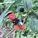 Berry season is upon us