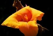 16th Jul 2021 - A lily
