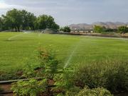 14th Jul 2021 - Green grass