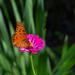Butterflies, finally...