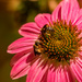 Bee's on the Flower!