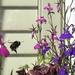 Mid summer Bee