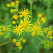 Flower meadows Moor Copse