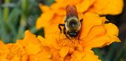 16th Jul 2021 - Pollinator