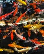 18th Jul 2021 - Fish