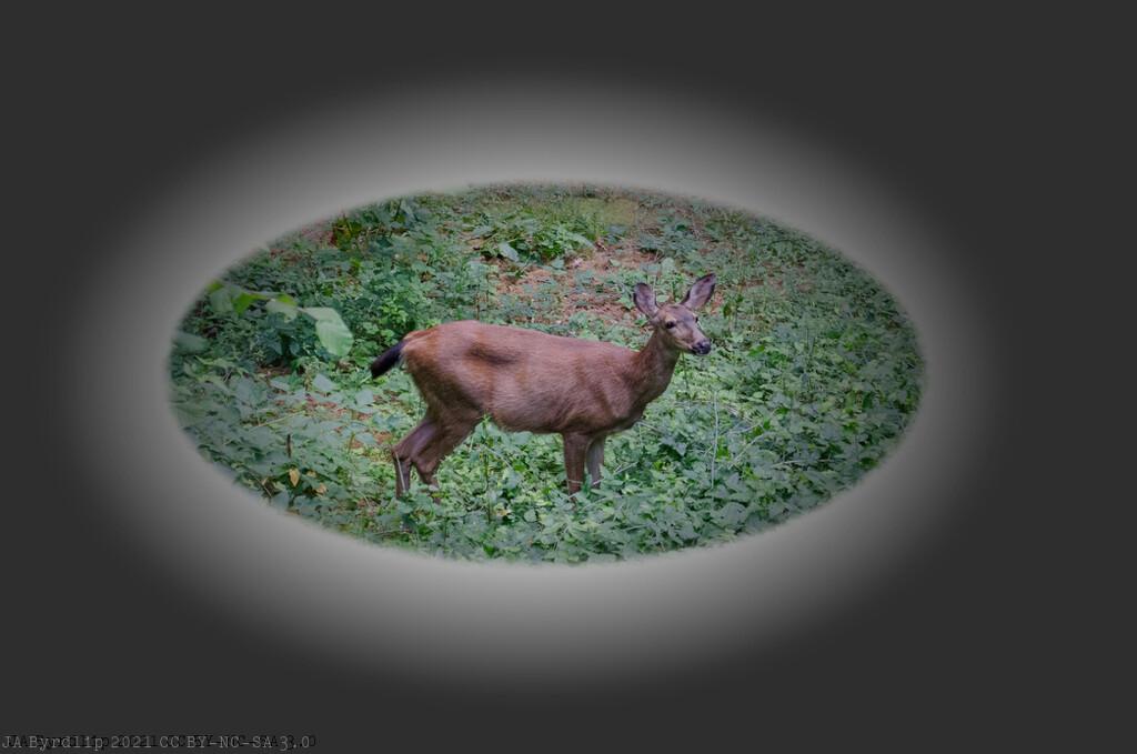 Reside Deer by byrdlip