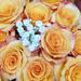 Y12 D199 Roses