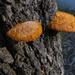 fungi fetish