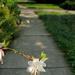 Sidewalk flower 7-18-21