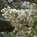 White crepes... by marlboromaam