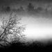 """the """"dread"""" tree...  and mist..."""