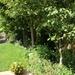 My Garden July 2021