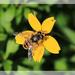 Bee by rustymonkey