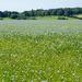 Fleeting Flax
