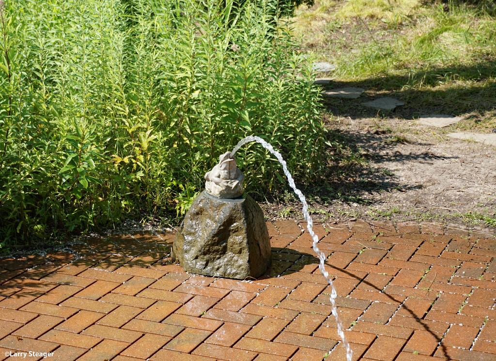 Frog at the splash pad by larrysphotos