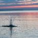 Creature of Lake Michigan