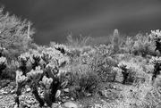 19th Jul 2021 - desert