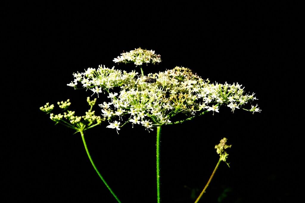 Flowerhead by allsop