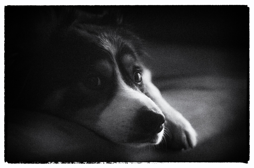 Dog Tired by fbailey