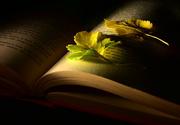 20th Jul 2021 - Book Leaves