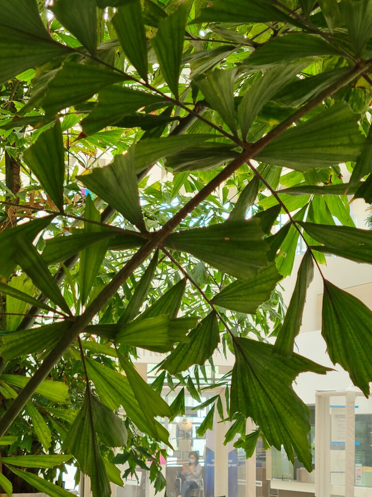 Palm Fronds in a Hospital by 365projectorgheatherb