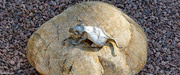 20th Jul 2021 - Origami mouse