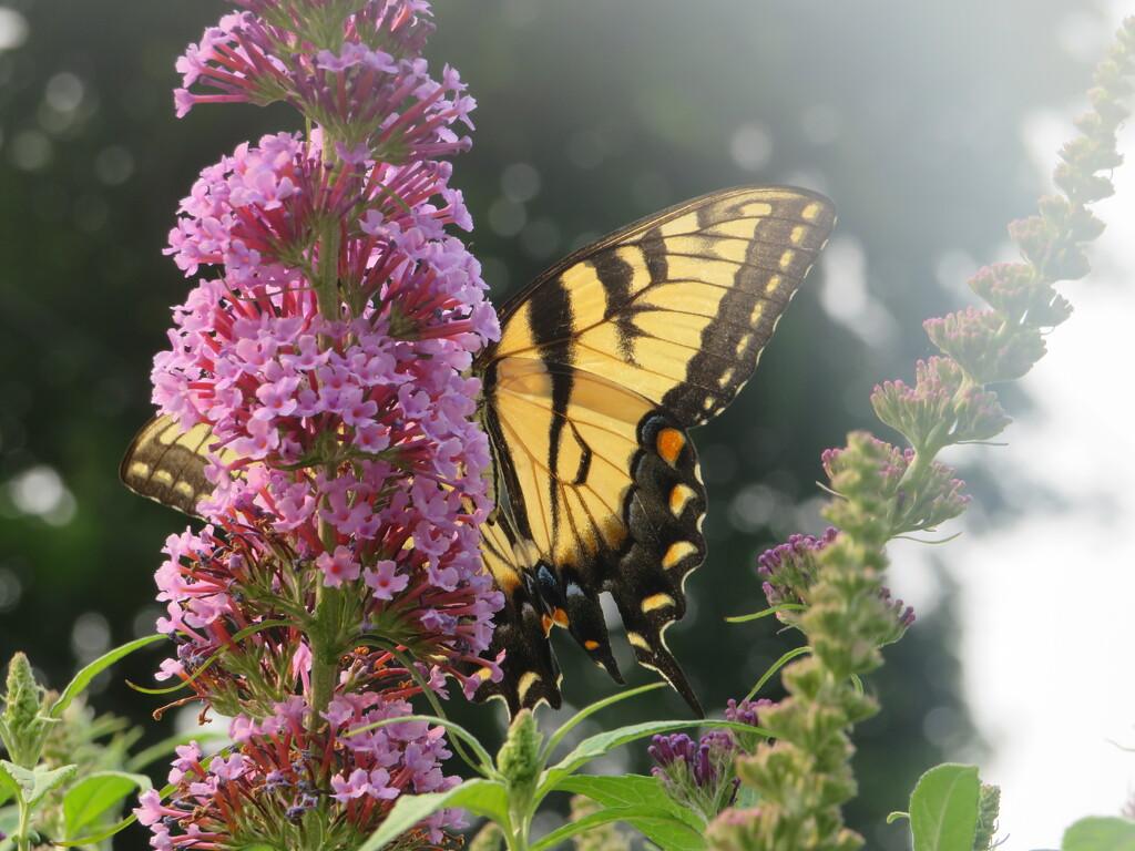 Chasing A Butterfly by jo38