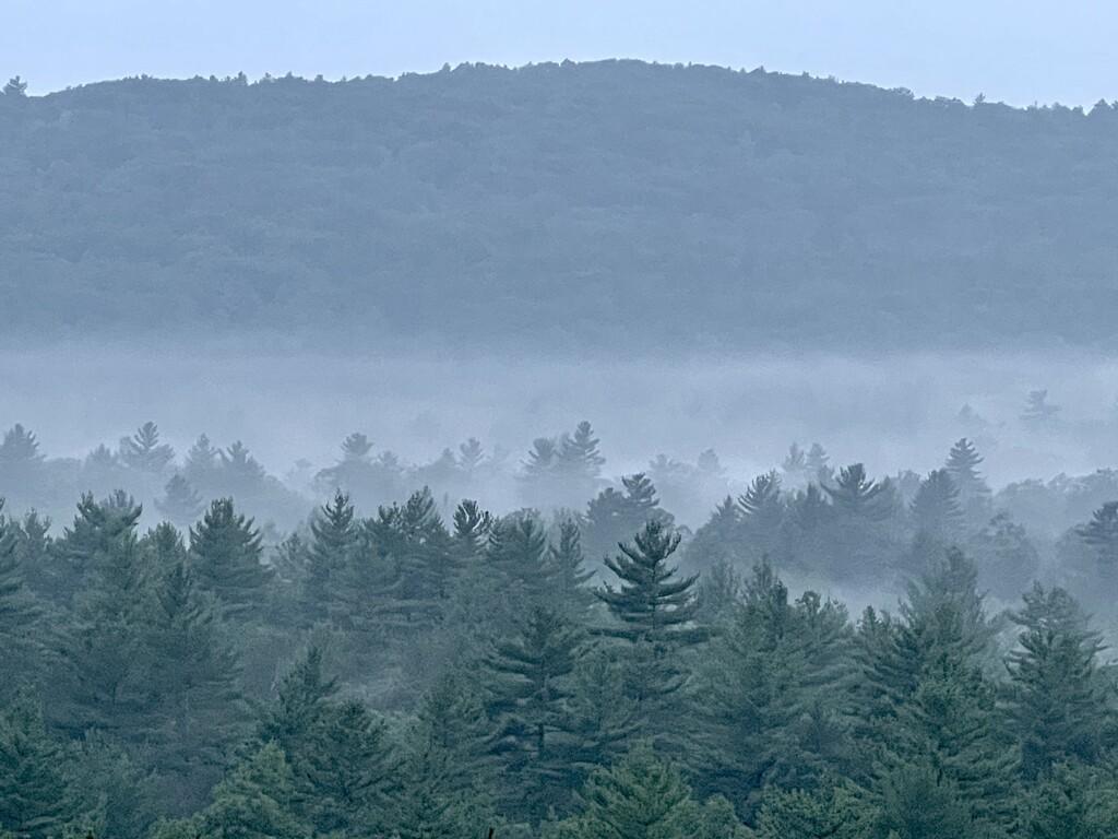 Fog by dianen