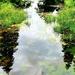 Drummund Castle Pond.