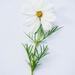 Flower  by newbank