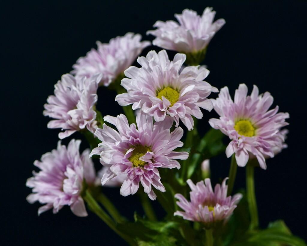 Flowers From A Friend DSC_7584 by merrelyn