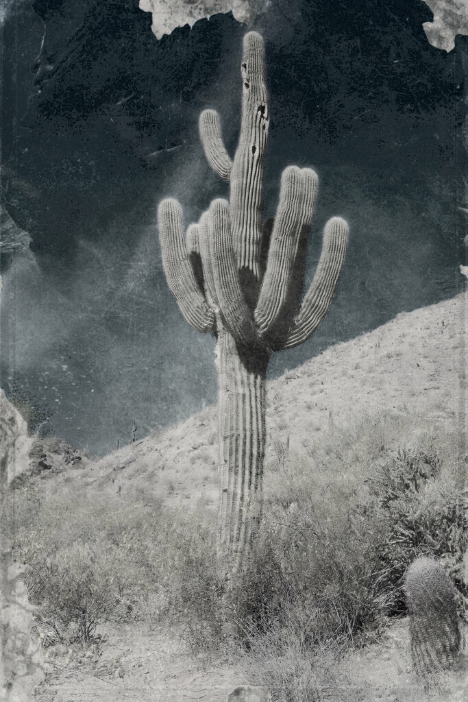 saguaro by blueberry1222