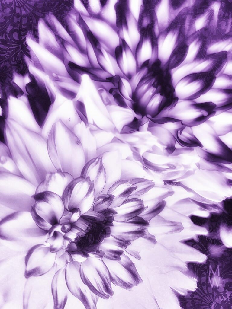2021-07-21 dahlia abstract by mona65