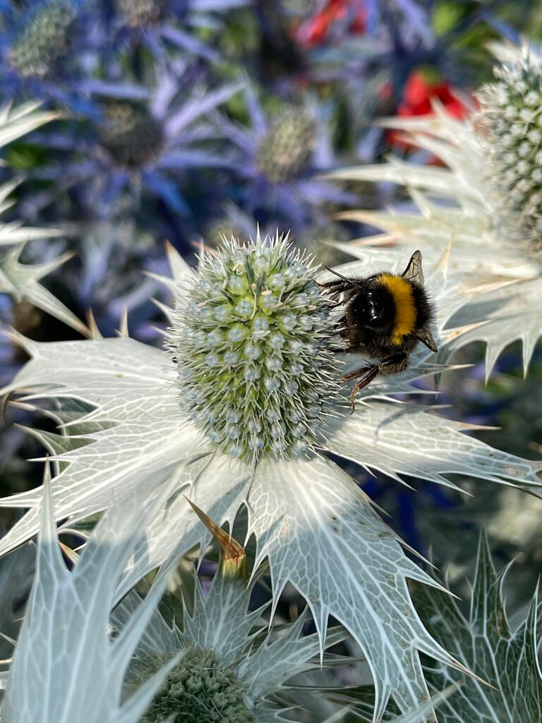Bee on White by 365projectmaxine