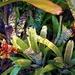 Beautiful Bromeliads ~