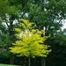 bright tree in the dark ones