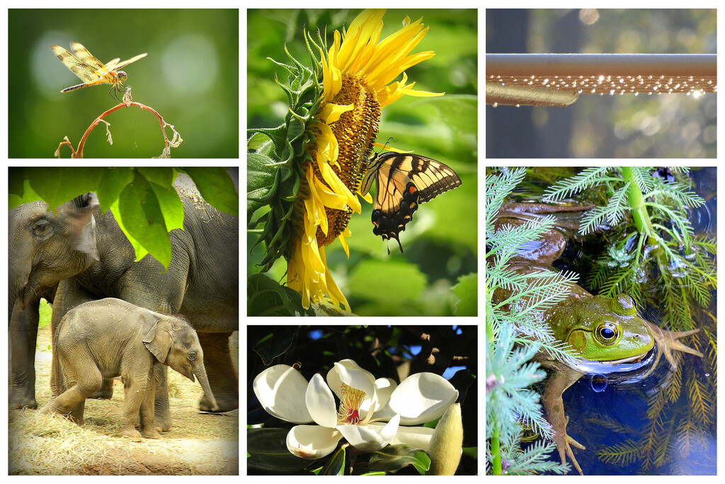 My 'Favorite' Pictures in a Collage by homeschoolmom