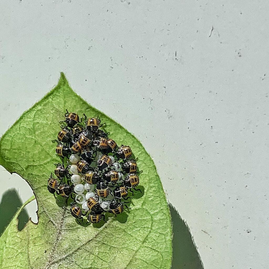 Bugs.  by cocobella